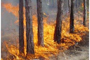 Искитимцев призвали осторожно обращаться с огнем в лесах