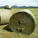 Искитимские полеводы завершают заготовку кормов