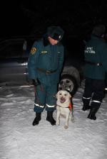 В спасательных работах участвуют собаки