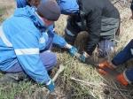 Двое бердчан и искитимец сливали горючее из нефтепровода в Коченёво