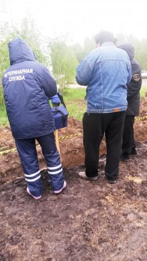Провалившегося в траншею возле НЗИВа лосенка спасли