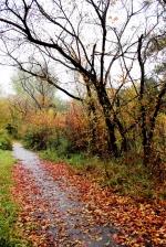 Какой парк в Искитиме будет благоустроен в ближайшие годы, решат жители города