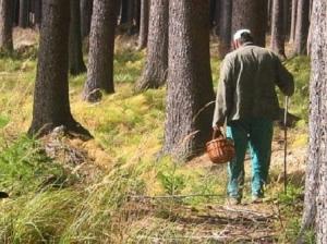Пожилой грибник два дня плутал по лесам Искитимского района