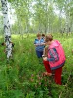 В лесах рядом с Линево растут уникальные сибирские орхидеи