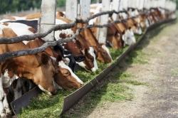 Искитимские начинающие фермеры получат господдержку