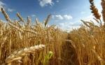 Урожайность в два раза выше, а темпы засыпки в два раза ниже прошлогоднего