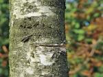 Искитимец вырубил деревья и теперь может пойти под суд