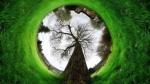 Впервые в Искитиме пройдет ЭкоФест «Зеленка»