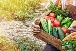Вырастил урожай - можешь продать