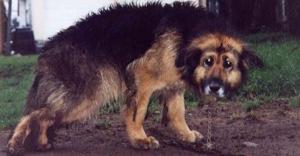 Убили и съели собаку искитимские живодеры