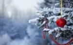 Похолодание и сильный ветер обещают синоптики