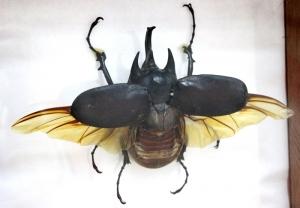 В Искитимском музее открылась выставка крылатых существ. Бабочки и не только…