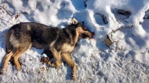 Новости из соцсетей: Под Искитимом живодер зверски убил собаку