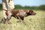 В Искитиме открылась единственная в области зона нагонки и натаски охотничьих собак