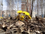 Синоптики на выходные обещают весну
