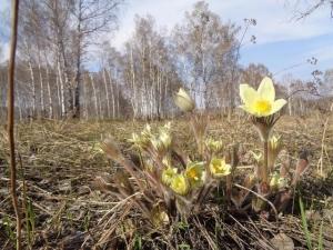 В понедельник, 30 апреля, обещают летнюю погоду