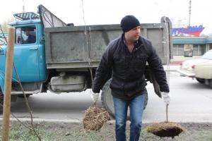 В Искитиме  высадили 200 лип и 100 рябин