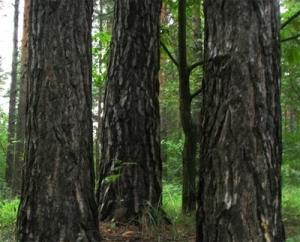 Девушка заблудилась в лесу в Китерне