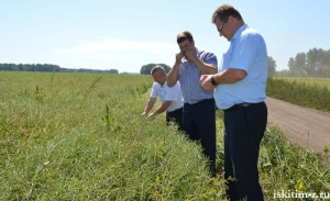 Искитимские аграрии переходят с пшеницы на рапс и сою