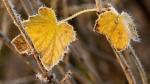 Осень начнется с заморозков