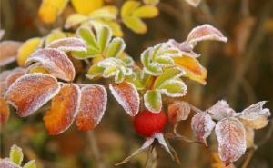 Заморозки, дождь и мокрый снег обещают на этой неделе синоптики