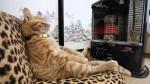 В дома Искитима идет тепло (ГРАФИК)