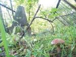 В субботу, 29 сентября, добровольцы приглашают всех на уборку старого городского кладбища