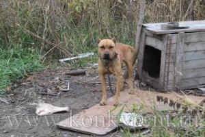 Новые вольеры строят в искитимском приюте для бездомных животных