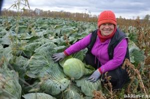 Небывалый урожай моркови собирает индивидуальный предприниматель Ирина Верхотурова