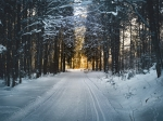 В Искитиме спортсмены открыли лыжный сезон