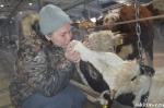 До тысячи герефордов планирует поднять стадо фермер из Искитимского района