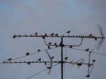 13 сел Искитимского района останутся вне зоны охвата цифрового телерадиовещания
