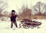 Новосибирские парламентарии утвердили изменения в закон о валежнике