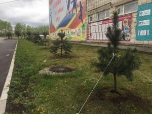 В Искитиме на стадионе «Заря» высажено 30 молодых сосенок