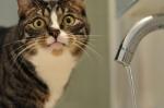 7 ноября не будет воды в Северном микрорайоне Искитима