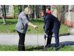 Глава Искитима Сергей Завражин принял участие в посадке молодых деревьев юбилейной аллеи Победы
