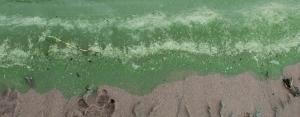 На месяц раньше в Берди «зацвела» вода