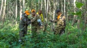 В два раза больше грибников заблудилось в лесах области в этом году