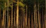 Статус природного парка будет придан Караканскому бору