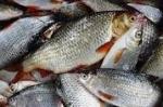 Стоимость улова — почти три миллиона рублей
