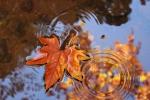 Осень начнется строго по расписанию: в августе еще тепло, а вот в сентябре температура понизится