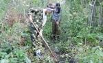 Школьники из села Тальменка восстанавливают лес в Искитимском районе