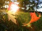 Синоптики прогнозируют аномально жаркое начало сентября