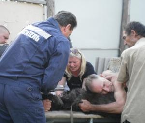 О приюте для бездомных собак и волонтерах
