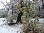 Синоптики прогнозируют снег, который будет валить до конца недели