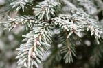 Резкое похолодание идет в Новосибирскую область