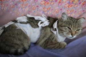 В Искитиме десятки кошек оказались на улице из-за наглухо заколоченнных подвалов