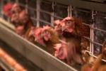 Более 1 млрд потребовали от агрохолдинга за куриный помет под Искитимом