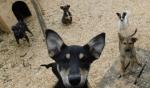Животных нечем кормить: помощи просит собачий приют в Искитиме