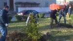 Даже при наличии видеозаписи, сотрудники полиции не могут определить тех, кто срубил елочку на Аллее Славы в Ложках